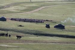 Mongolie 20160719 004807441