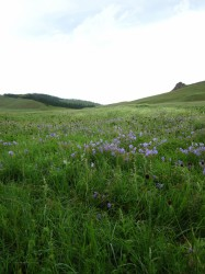 Mongolie 20160721 024144079