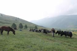 Mongolie 20160723 020641040