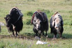 Mongolie 20160723 021332045