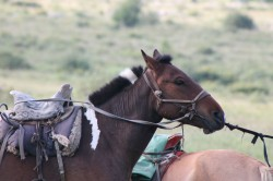 Mongolie 20160723 021356046