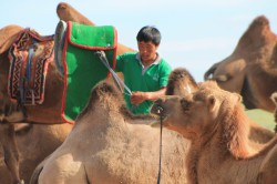 Mongolie 20160727 025947311
