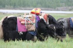 Mongolie 20160721 042141179