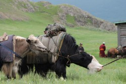Mongolie 20160721 042151180