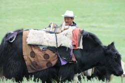 Mongolie 21 juillet 2016